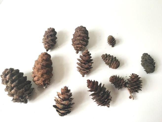Clean pine cones