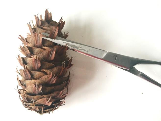 Cut pine cones