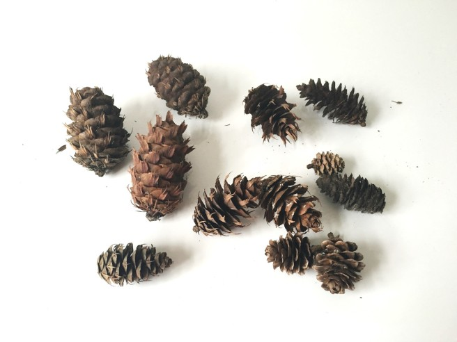Pine cones Luxembourg