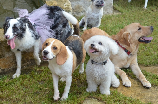 Dogs Party
